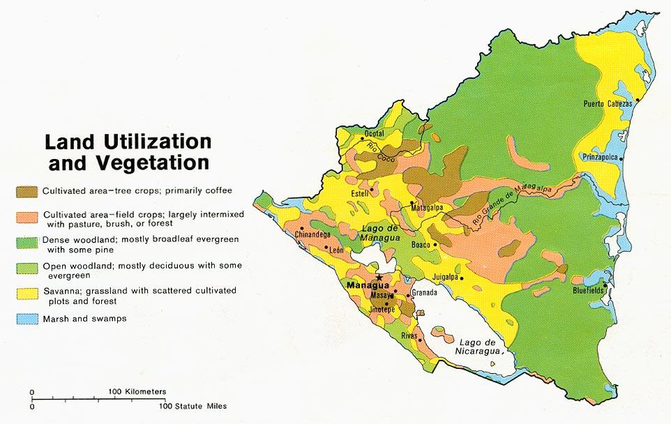 FUTURO PINICOLA El gran reto de Nicaragua es aumentar su