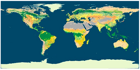 Land Cover Dynamics