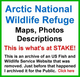 ANWR Arctic National Wildlife Refuge; What is at stake; removed USFWS website; photos, maps, descriptions